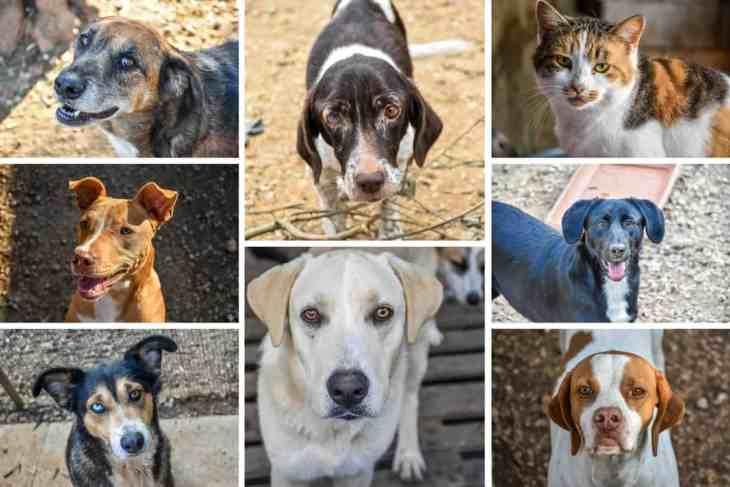 Animal Rescue Kefalonia Collage 1
