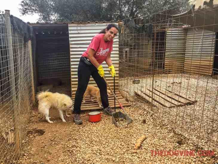 Animal Rescue Kefalonia Volunteering 2