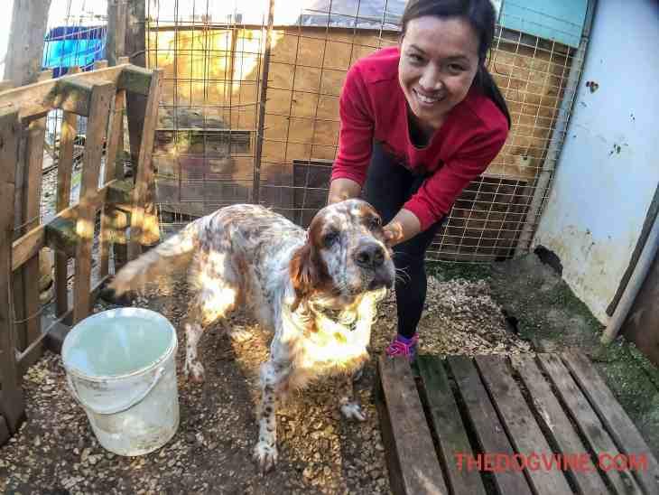 Thao & Odissea - Animal Rescue Kefalonia