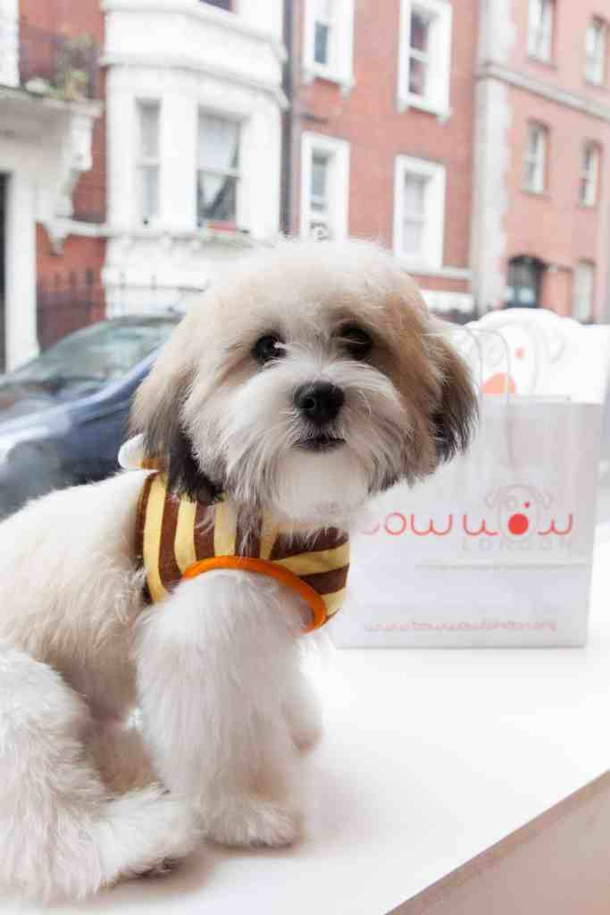 Amanda Holden Dog Buddy Bow Wow London Dog Grooming Launch