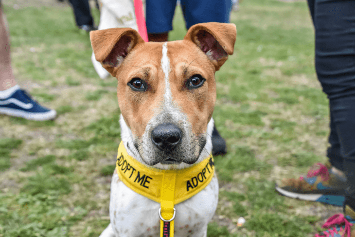 Best Adopt Me Face - Sid Great Hampstead Bark Off 2017