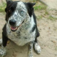 Alternatives To Commercial Dog Food