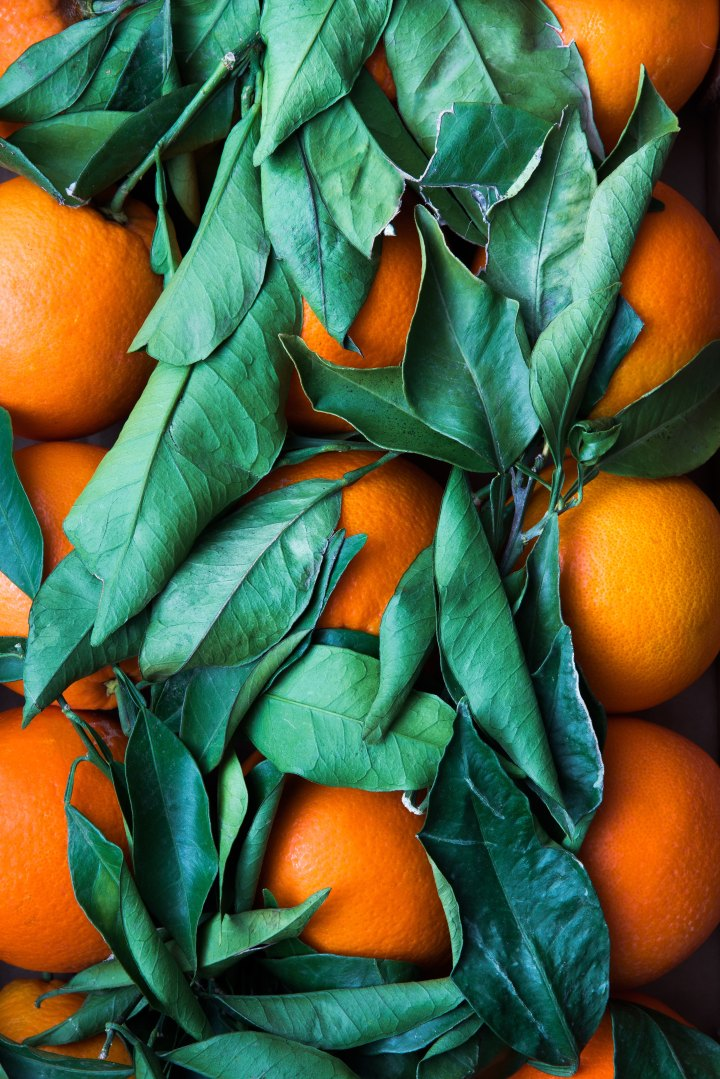 There are no GMO oranges even though some brands of orange juice say they are GMO-free