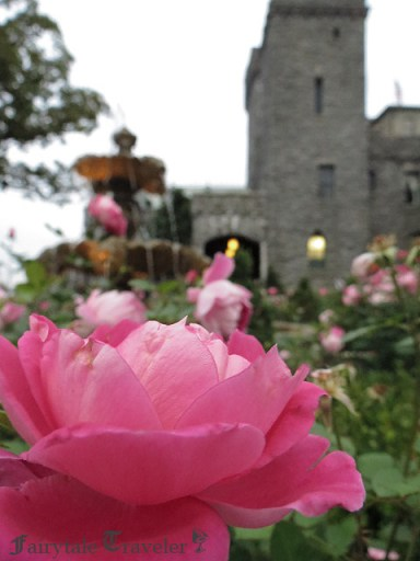 Princess pink roses surround the center fountain in front of the Castle, photo by Christa Thompson