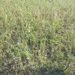 Hail Damaged Soybeans via thefarmerslife.com