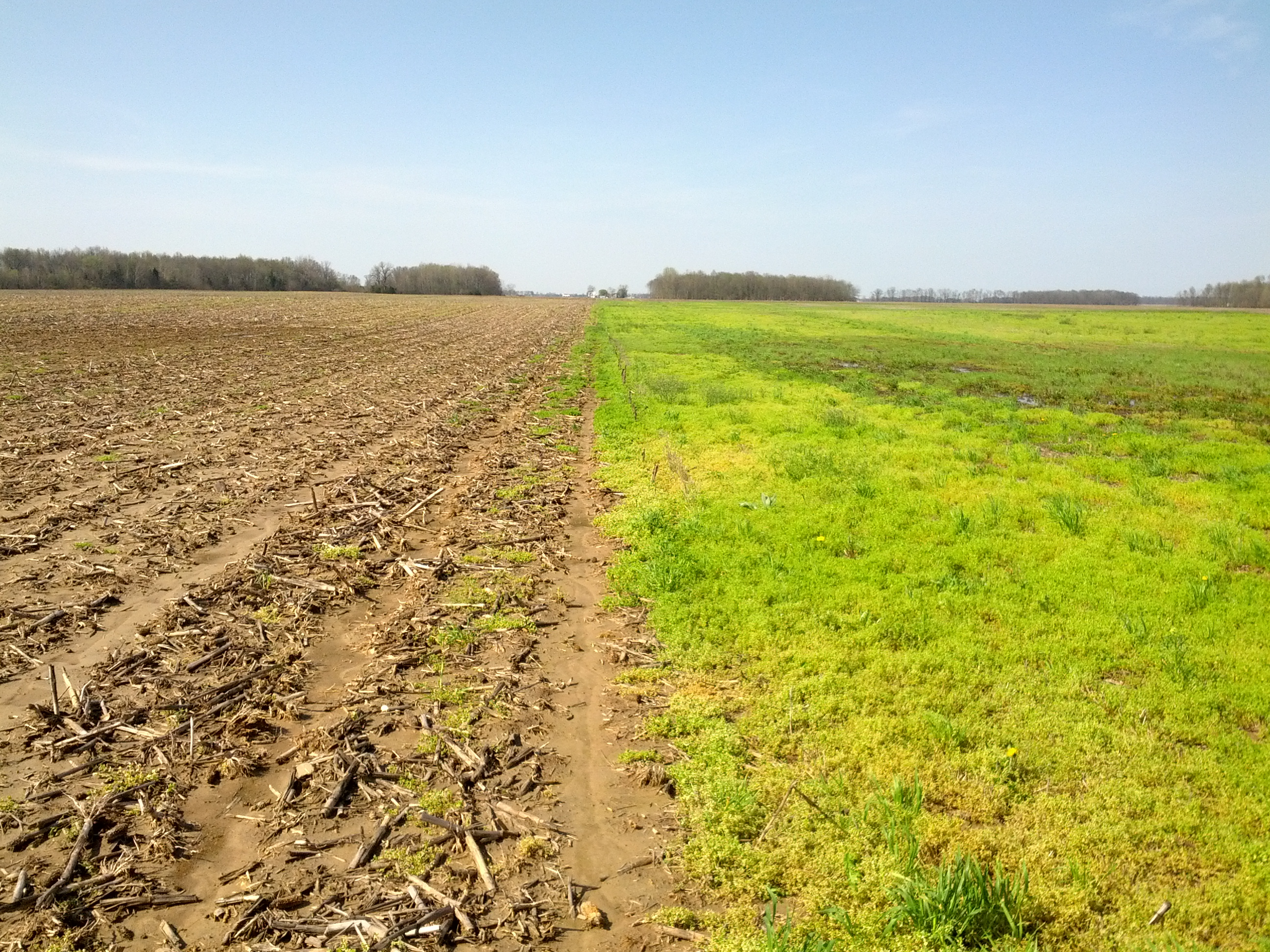 Weeds Are A Challenge For Farms Of All Types The Farmer