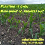 Planting is over. Now what do farmers do? via thefarmerslife.com