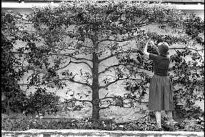 Bunny Mellon in her garden in 1982