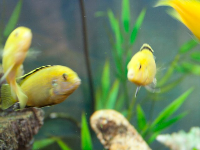 Fish Tank Maintenance Services by an Expert in Fish Aquariums for a