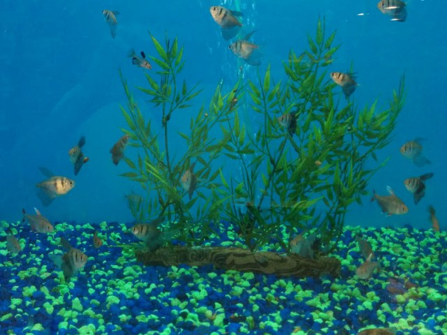 Fish Tank Maintenance Services to Design and Installation for Fish