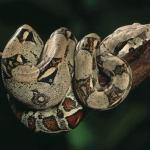 Virgin snake gives birth to 22 babies.