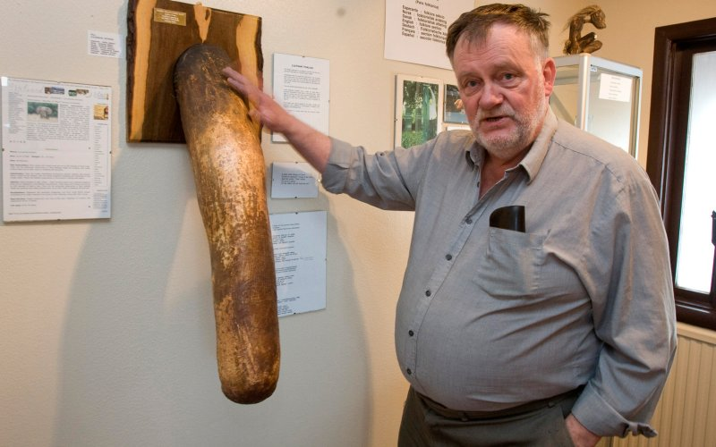 Sigurdur Hjartarson, owner and founder of the Icelandic Phallological Museum, proudly strokes his stuffed elephant penis.