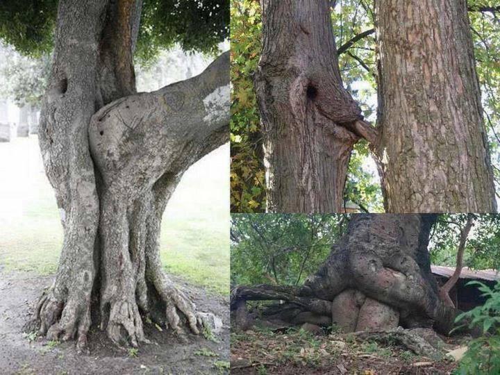 bizarre trees