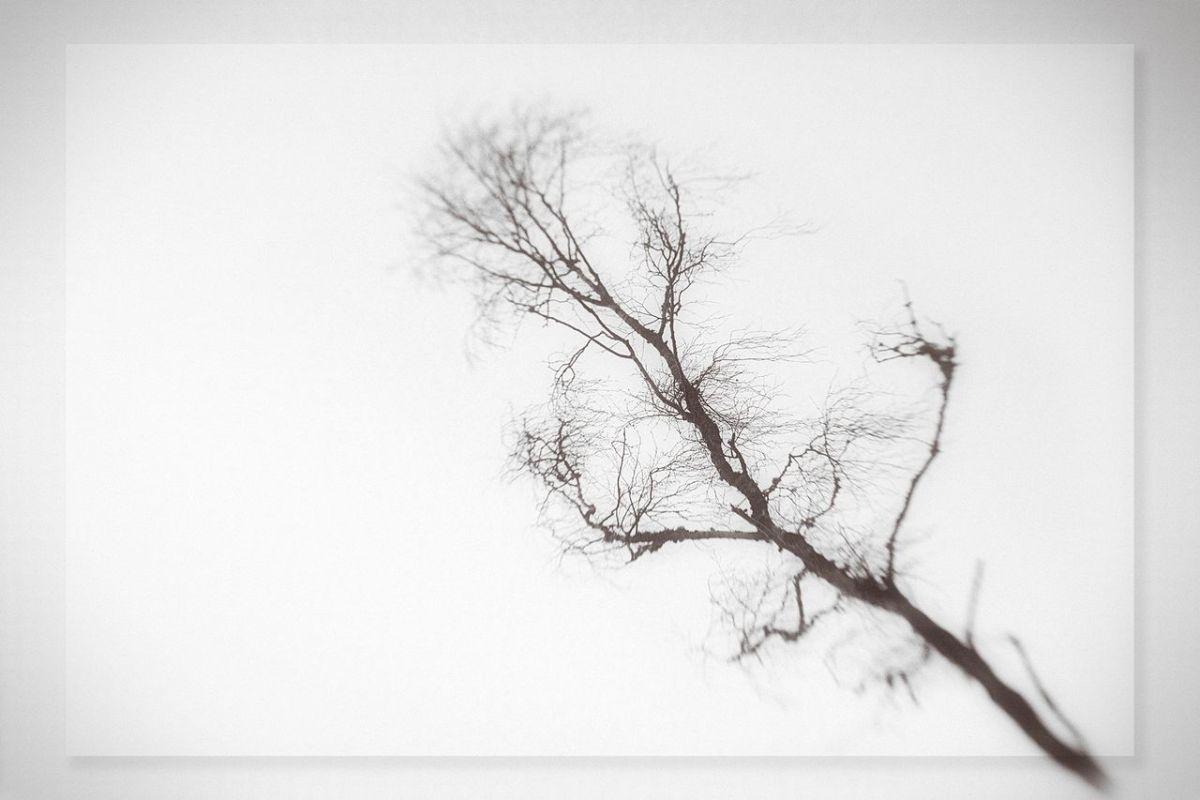 """Trees """"sleep"""" at night"""