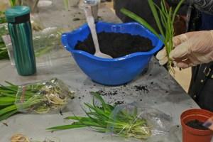 WEB_ARTS_Green-Fest-Plant-Workshop_Mariah-Amed