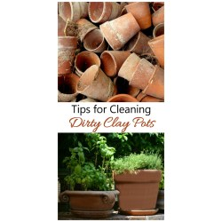 Small Crop Of How To Sterilize Soil