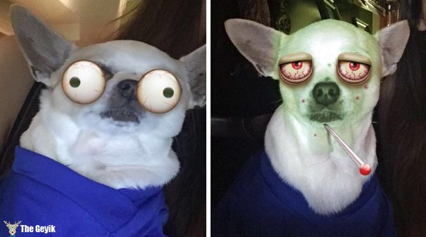 Evcil Hayvanları Snapchat Filtreleriyle Buluşturmak 9