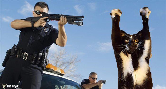ayakta duran kedi komik photoshop battle 11