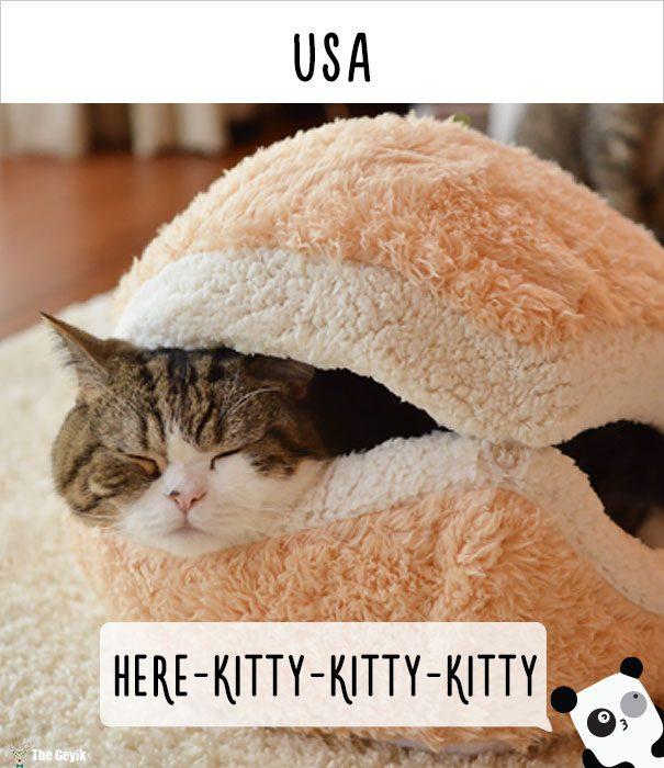 insanlar kedileri diğer dillerde nasıl çağırıyor 14