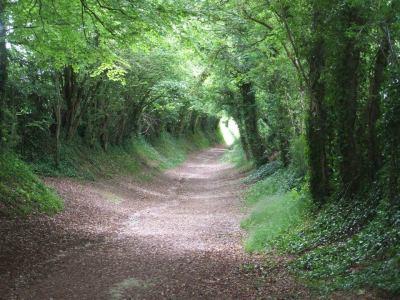 """Halnaker Tree Tunnel"""