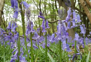 """Bluebells"", ""Gordon Bryan"","