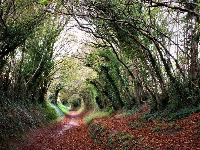 """Halnaker tree tunnel"","