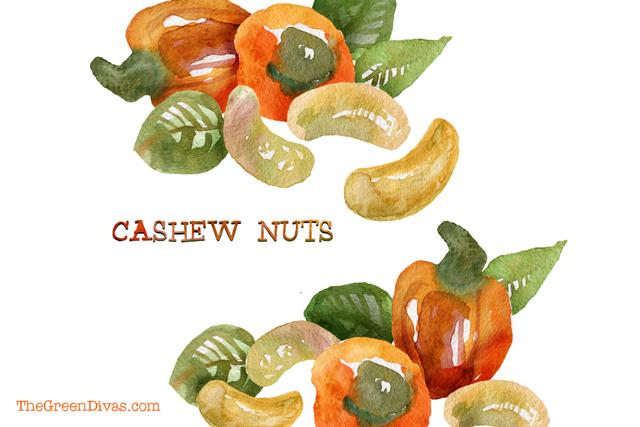 raw cashews illustration on the green divas