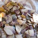 Shells 13