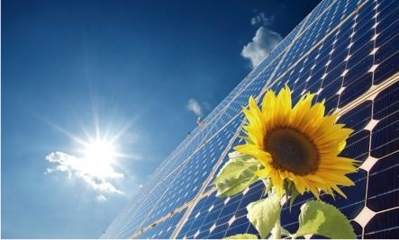 sunflower and solar panel