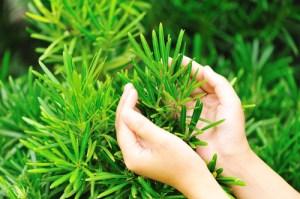 3 gardening tips