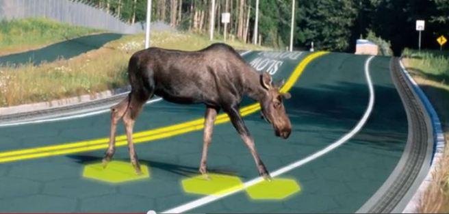 moose on solar freakin roadways