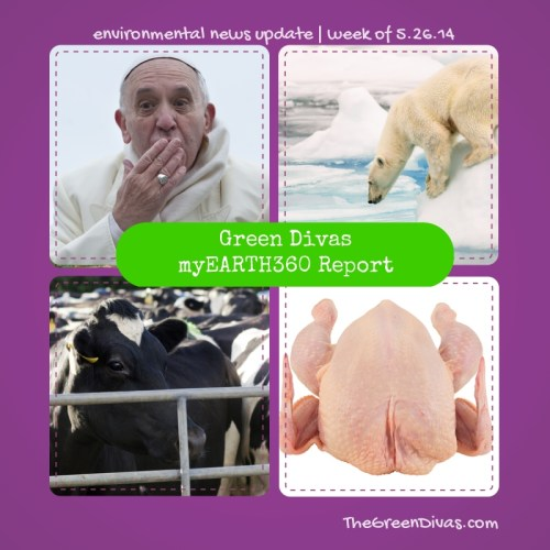 myearth360 report eco-pope and cow poop pollution