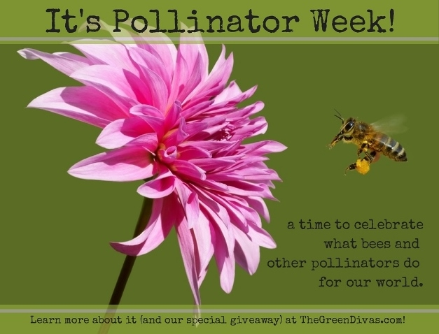 pollinator week and giveaway