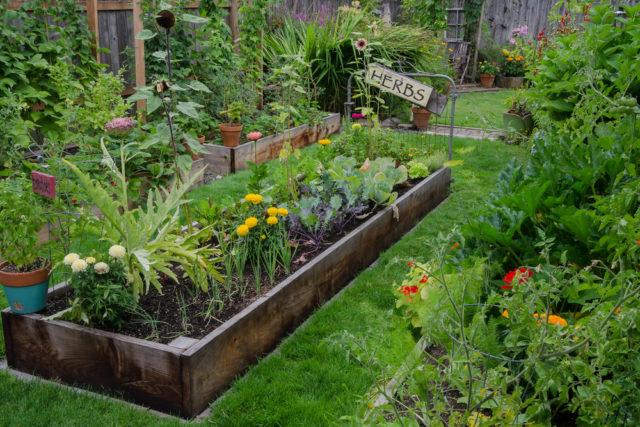 backyard eco-friendly garden