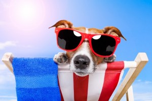 dog with sunglasses at summer beach
