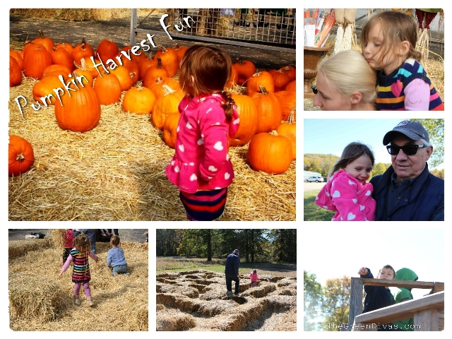 Pumpkin Harvest Fun