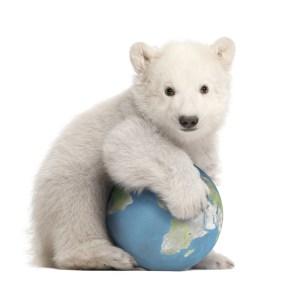 polar bear cub and earth