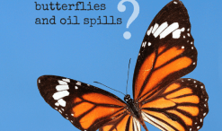 butterflies and oil spills