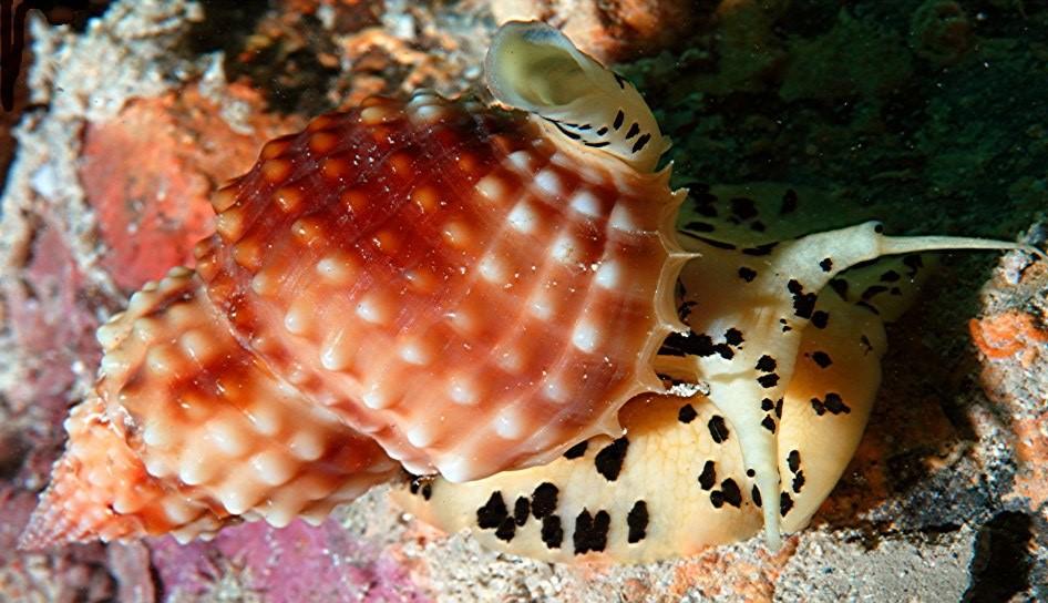 living shells2