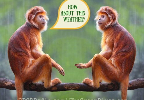 weather quotes with monkeys