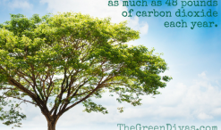 one tree can absorb as much as 48 pounds