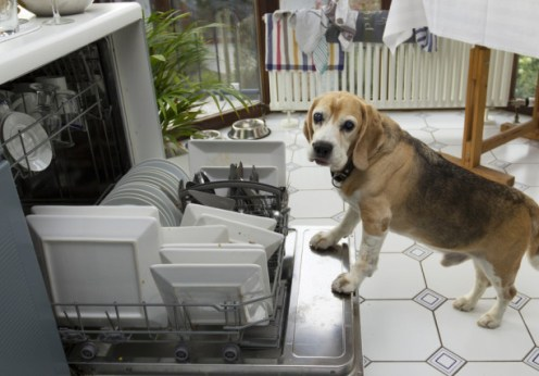 do dishes need to be rinsed (or licked by a dog) before being cleaned by dishwasher?