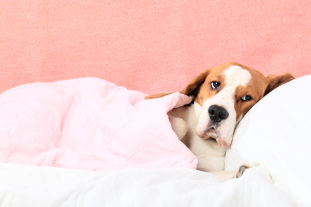 natural remedies for your sick dog