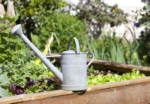 diy pesticides for the garden