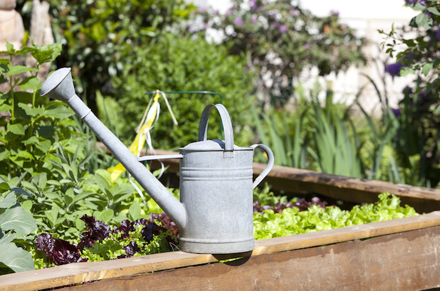 diy pesticides for the garden