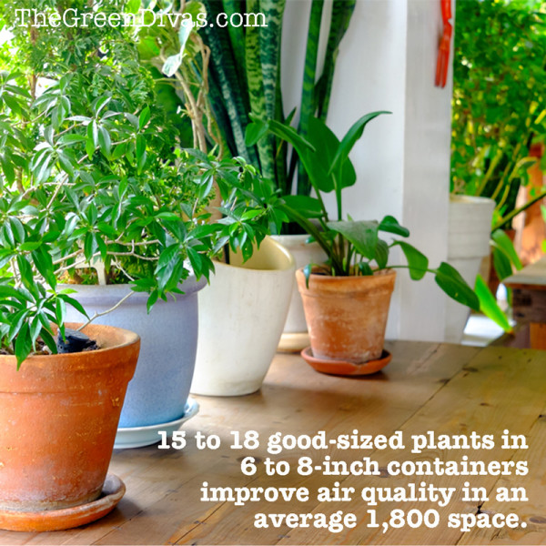 Houseplants for a healthy home quote