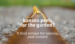 food scraps for pest control in garden