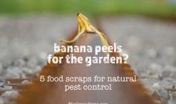 food scraps for pest control in garden