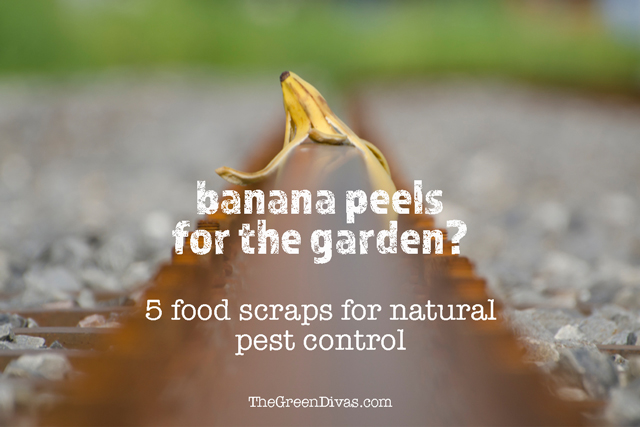 food scraps for natural pest control in garden