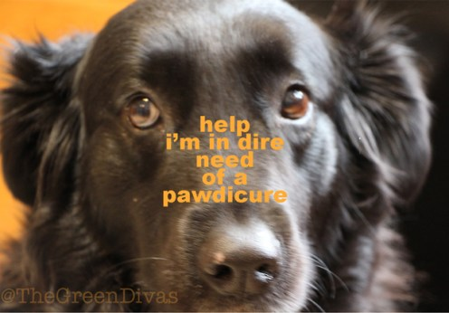 gracie gets a pawdicure on the green divas
